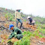 Rộng cơ hội cho nghề trồng rừng ở miền Tây