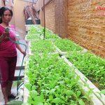 Sốt với các công cụ tự trồng rau sạch