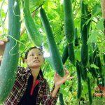 Phụ nữ xã Giang Sơn Tây-Tập trung xây dựng các mô hình kinh tế trang trại