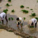 Giá bồi thường đất lúa sẽ gấp đôi đất ở