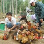 Chàng trai Đô Lương với mô hình nuôi gà tiền tỷ