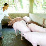 """""""Nói không với chất cấm"""" trong chăn nuôi: Từ ký kết đến hành động"""