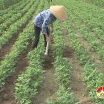 Hiệu quả từ trồng cây trồng ở xã Ngọc Sơn