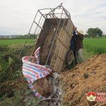 Đô Lương tiêu huỷ 160 kg thịt lợn không rõ nguồn gốc