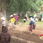 100 cán bộ, hội viên Chi hội phụ nữ xã Đà Sơn lao động làm vườn rau