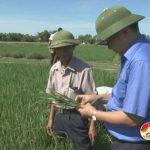 Đồng chí Nguyễn Trung Thành – Phó Chủ tịch UBND huyện kiểm tra công tác phòng trừ sâu bệnh cho lúa Hè Thu