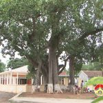 Cây đa cổ thụ trên 600 năm tuổi ở xã Hiến Sơn