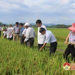 Trạm khuyến nông Đô Lương hội thảo mô hình thâm canh giống lúa ngắn ngày DCG72  bằng phương pháp bón phân cải tiến.