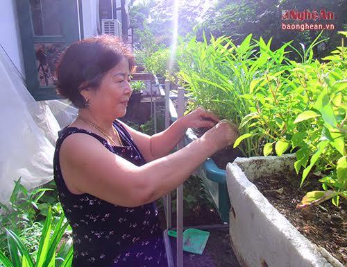 Tự trồng rau sạch