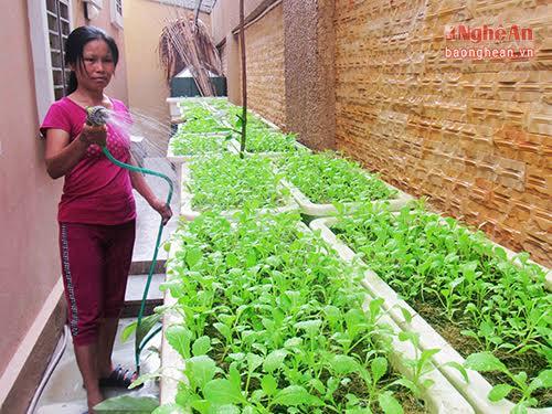 Nhiều gia đình, tận dụng mọi khoảng trống để xếp thùng xốp, khay nhựa trồng rau.