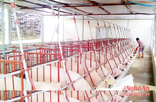 . Việc vận dụng các tiến bộ khoa học kỹ thuật vào chăn nuôi sản xuất cũng được hội chú trọng nhằm giảm bớt sức lao động, tăng hiệu quả sản xuất.