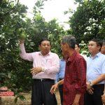 Chủ tịch UBND tỉnh Nguyễn Xuân Đường làm việc tại Đô Lương