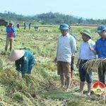 Đồng chí Ngọc Kim Nam CT.UBND kiểm tra khắc phục hậu quả sản xuất hè thu do mưa lụt gây ra