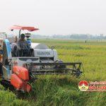 Đô Lương tập trung thu hoạch lúa hè thu