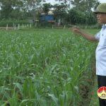 Đồng chí Trương Hồng phúc – Bí thư huyện ủy kiểm tra thiệt hại sau mưa lụt tại các xã.