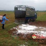 Đô Lương tổ chức tiêu hủy bò chết không rõ nguồn gốc