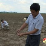 Thuận Sơn hơn 80 ha ngô trên đất bãi mới gieo trồng bị mất trắng do ngập lụt.