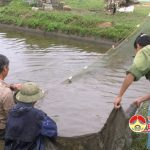 400 ha nuôi cá ruộng đem lại hiệu quả kinh tế cao.
