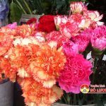 Thị trường quà tặng 20/11 tại Đô Lương