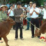 Đồng chí Lê Minh Giang – Phó bí thư thường trực – Chủ tịch HĐND huyện trao tặng bò cho các hộ nghèo
