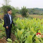 Đồng chí Ngọc Kim Nam – Chủ tịch UBND huyện kiểm tra các mô hình phát triển nông nghiệp ở các xã