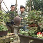 Thú chơi cây cảnh ngày tết ở Đô Lương