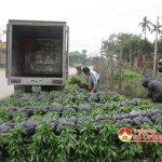 Đô Lương chuẩn bị tốt cây giống trồng rừng vụ xuân 2017