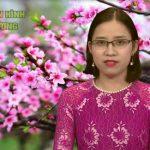 Chương trình thời sự Truyền hình Đô Lương ngày 29 tháng 1 năm 2017( tức ngày 2 tết)
