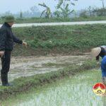 Đồng chí Nguyễn Trung Thành kiểm tra công tác  sản xuất vụ xuân