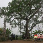 Cây đa Hồng Sơn được công nhận cây di tích  lịch sử văn hóa Việt Nam