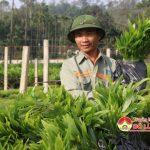 Công ty TNHH một thành viên Lâm nghiệp Đô Lương cung ứng 30 vạn cây trồng vụ xuân