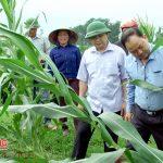 Đồng chí Nguyễn Trung Thành kiểm tra tình hình thiệt hại do lốc xoáy