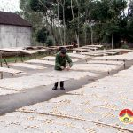 CCB Dương Phúc Hùng thành công từ làm bánh đa kết hợp chăn nuôi