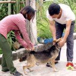 Đô Lương tiêm 30.000 liều vắc xin dại chó