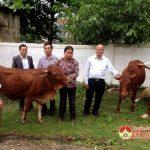 Các đồng chí lãnh đạo huyện trao tặng bò tới các gia đình có hoàn cảnh khó khăn