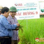 Đô Lương tổ chức hội thảo đầu bờ giống lúa chất lượng cao Bắc hương 9