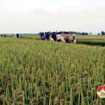 Phụ nữ Hiến Sơn tích cực bảo vệ môi trường đồng ruộng