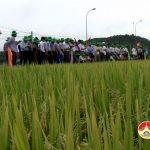 Phòng nông nghiệp hội thảo giống lúa ADI 168 tại xã Tân Sơn