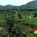 Xã Thương Sơn, quan tâm phát triển kinh tế gia trại