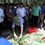 Tỉnh đoàn Nghệ An tổ chức tập huấn: Kỹ thuật ủ chua thức ăn thô xanh cho gia súc