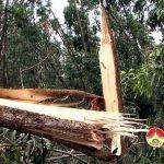 Công ty TNHH MTV Đô Lương thiệt hại gần 1.000 ha rừng nguyên liệu
