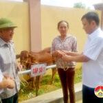 Trung tâm khuyến nông tỉnh giao bò giống cho hộ nghèo ở xã Giang Sơn Đông.