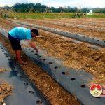 Nông dân Đô Lương trồng Bí trái vụ