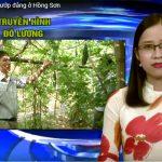 Hiệu quả từ trồng mướp đắng ở Hồng Sơn