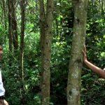 Lam Sơn làm giàu từ trồng rừng.