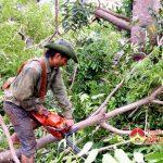 Thị trấn Đô Lương triển khai công tác bão số 10