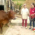 Hội chữ thập đỏ huyện Đô Lương trao tiền mua bò giống  cho các hộ nghèo