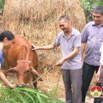 UBMTTQ Thị trấn Đô Lương trao tặng bò cho hộ  cận nghèo