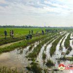 Lam Sơn ra quân làm giao thông thuỷ lợi