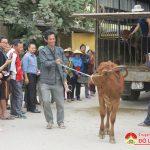 Chi cục phát triển Nông thôn tỉnh trao bê hỗ trợ cho 24 hộ dân xã Minh Sơn